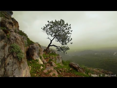 3 Hours of Beautiful Violin Guitar Flute Harp Cello Piano Music - Instrumental Music